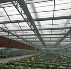 天津滨海新区电厂温室项目