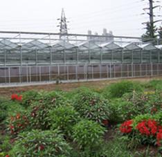 陕西榆林温室项目(10000平米左右)1