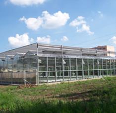 陕西榆林温室项目(10000平米左右)